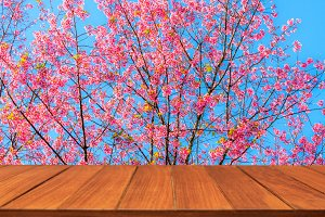 Wood table top on sakura flower