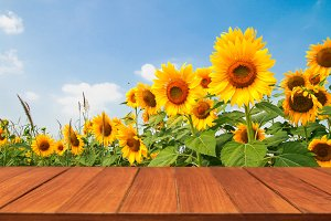 Wood table top on sunflower