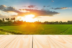 Wood table top on rice field