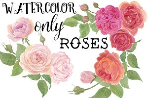 Only Watercolor ROSES