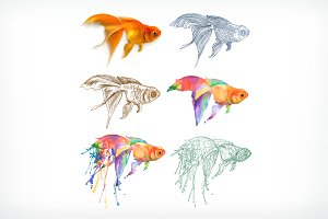 Goldfish, different styles