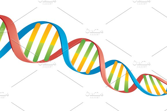 double helix dna strand illustrations creative market