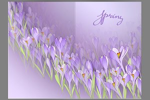 Spring crocuses. Vector illustration