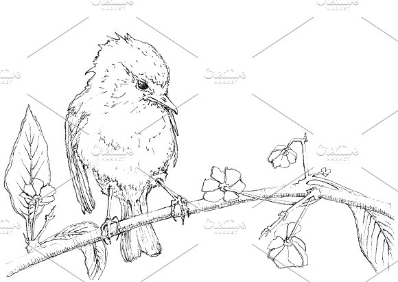 Watercolor bird sitting on a tree in Illustrations - product preview 3