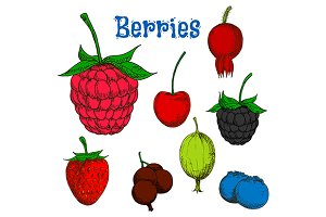 Ripe colorful berry fruits sketches