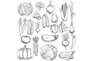 Organic farm vegetables sketches