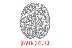 Sketch of human brain