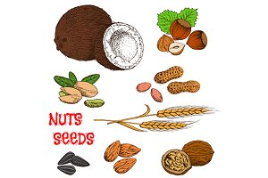 Sketches of nuts, seeds, beans