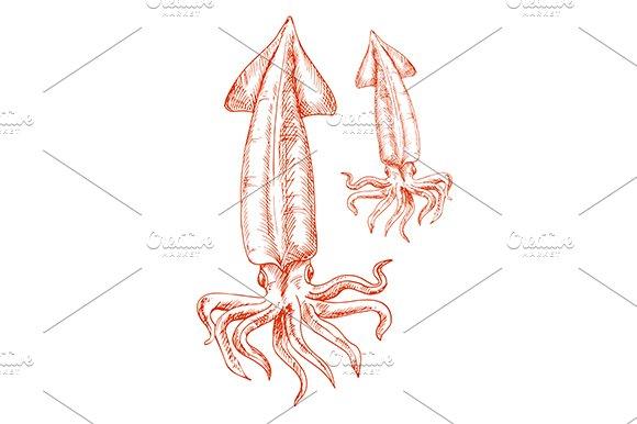 Vintage sketch drawing of red squid