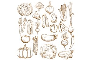 Autumnal vegetables sketches