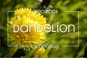 3 video of  yellow dandelion