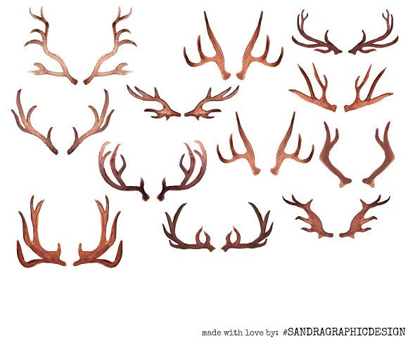 antlers and flowers clip art illustrations creative market