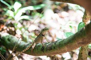 Green Lizard 2