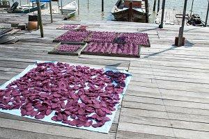 Purple Shrimp 2