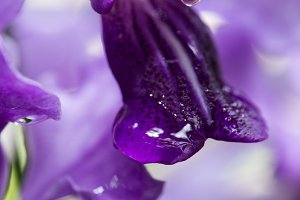 Purple and Wet