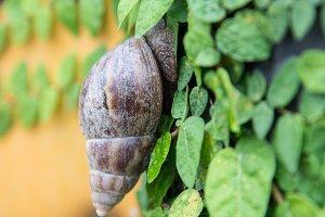 Garden Snail on Wall