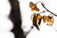 Warm Leaf