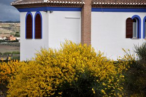 gorse and blue house