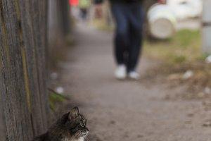 Cat sitting near the fence on the sidewalk