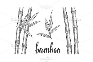 Bamboo trees with leaf