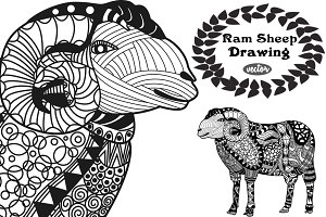 Ram Sheep Drawing