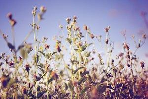 Pastel of little flowers