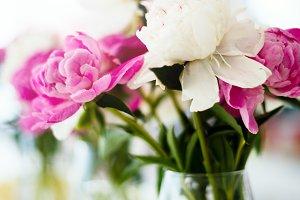 Wedding pink ranunculus flowers
