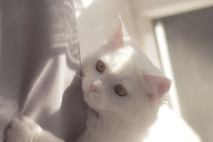 Playful kitty!