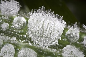 Crystallized dew droplets