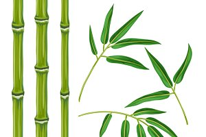 Set of bamboo plants and leaves.