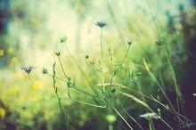 iseeyouphoto summermeadow 13
