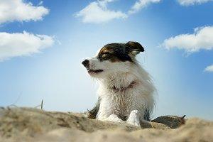 dog, sand and sky