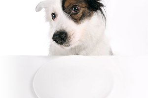 Dog and empty plate