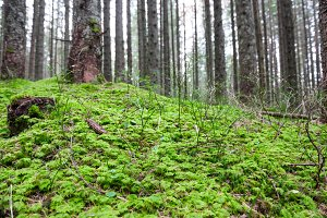 Green grass under big trees