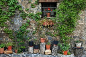 Wall with plants and window