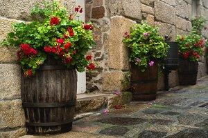 Wooden flower pots and geraniums