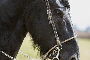 Beautiful fine thoroughbred