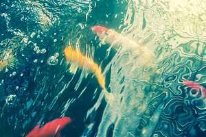 Blurred images of Koi Fish