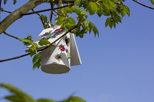 Birdhouse in Maple tree at spring II