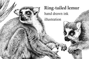 Ring-tailed lemur ink drawing