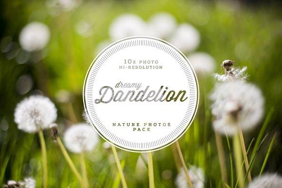 Dreamy Dandelion 10 Hi-Res Photo