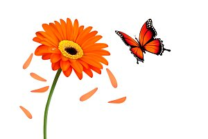 Nature Summer Flower With Butterfly