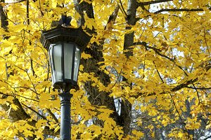 Park lantern at autumn