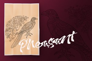 Pheasant. Coloring book for adult