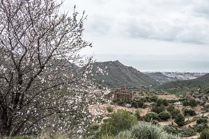 Tree and views Benicassim