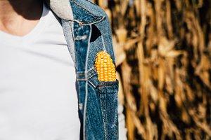 Man in a cornfield