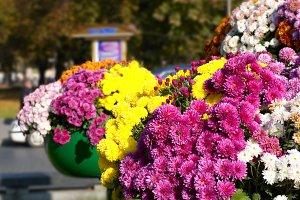 Flower arrangement on street