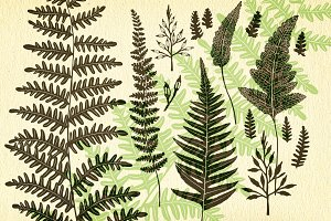 Ferns, botanical vector graphics