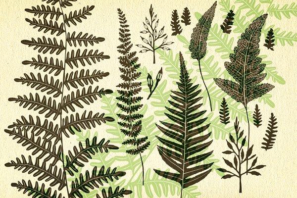 Ferns, botanical vector graphics