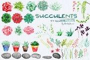 Succulents- patterns & illustrations